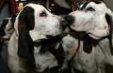 GRENOBLE (38)  Plus de 900 chiens présentés ce week-end à Alpexpo