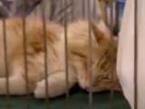Salon International du Chat d'Orléans