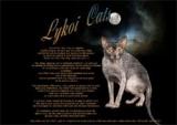 le Lycoi, le chat loup...