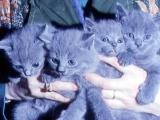 Montreuil (62) Arnaque au chat