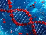 La Génétique Félne à votre Service