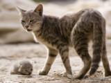 Éradication programmée des chats errants de l'île de la Réunion
