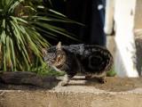 Éradication des chats de l'île de la Réunion: le recours de One Voice rejeté