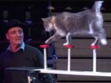 William Weldens, profession : dresseur de chats