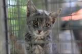 Toulon - Refuge des chats : un abandon toutes les dix-huit heures