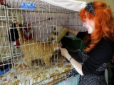 Suisse - Caresseuse de chats, une occupation au poil