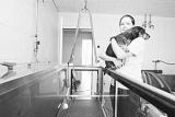 Suisse - Une clinique unique pour chiens et chats