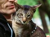 Le comportementaliste félin : un médiateur entre le chat et son humain