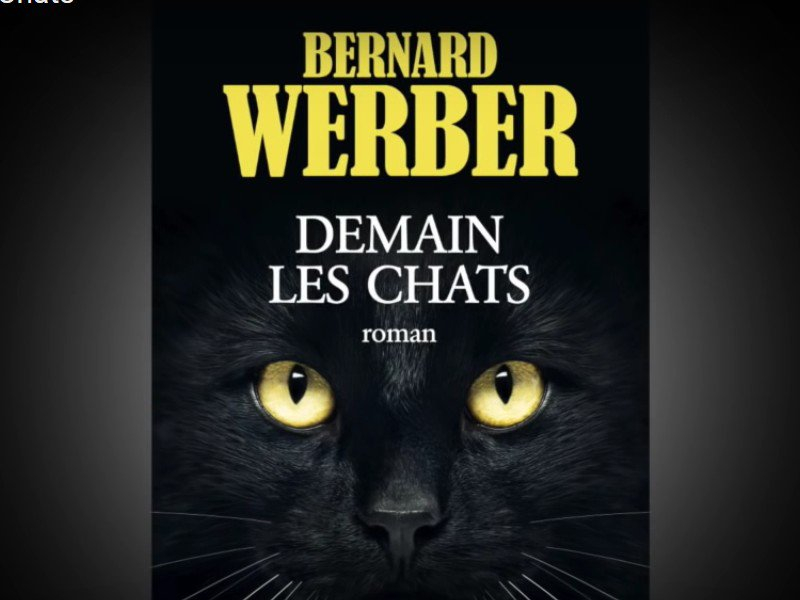 demain les chats de bernard werber la vie des hommes racont e par des chats. Black Bedroom Furniture Sets. Home Design Ideas