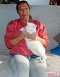 Au secours des Chats de Lanton (33)