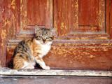 A Montpellier, des petites cabanes en bois pour les chats sans toit