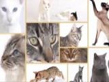 Choisir un chat selon le caractère de sa race