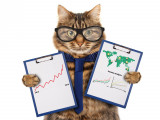 Les 10 chats (races) les plus intelligents