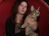 Un Caracat, chat le plus rare au monde, star des caméras russes