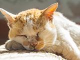 Le Chat Âgé