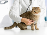Votre chat est-il en bonne santé ?