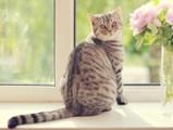 Prendre soin de son chat, quel que soit son mode de vie