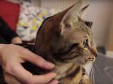 Comment masser son chat?