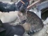Amatrice et Illica (Italie): des chats retrouvés vivants sous les décombres