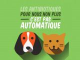 Les antibiotiques pour les chats