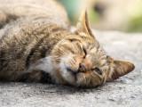 Les urgences chez le chat