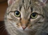 Sale temps pour les chats en Belgique