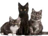 Il meurt après l'euthanasie de 96 de ses chats