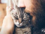 Fin de vie animale : les vétérinaires en première ligne