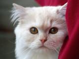 En Suisse, plusieurs chats touchés par un dangereux virus