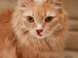 Mon chat saigne du nez : que faire ?