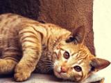 Le cannabis pour soigner les chats, est-ce une bonne idée?