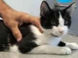Détecter des puces sur votre chat et le traiter correctement