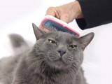 L'entretien de la peau et du pelage du chat
