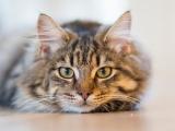 10 conseils pour augmenter l'espérance de vie de son chat