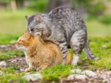 L'activité sexuelle des chats