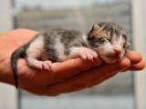 Les soins et l'apprentissage de la propreté pour un chaton non sevré