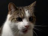 Belgique: stérilisation des chats obligatoire en Wallonie