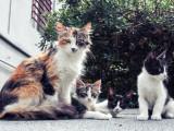 Chypre serait-elle devenue l'île aux chats?