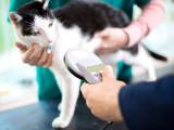 Les différents moyens d'identification pour un chat