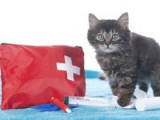 Premiers soins : la trousse de secours du chat