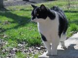 Les dangers et sources d'accidents pour un chat à l'extérieur