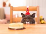 L'âge du chat : équivalence en âge humain