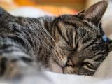 La diarrhée chez le chat : causes et traitement