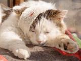 Mon chat saigne ou a une plaie : que faire ?