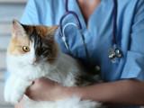 7 astuces pour diminuer le stress du chat lors des visites chez le vétérinaire