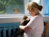 Chat qui vieillit : comment prendre soin d'un chat âgé ?
