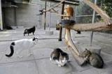 Suisse - l'euthanasie est le moyen le plus efficace pour lutter contre la surpopulation des chats.