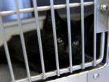 Québec :  près de 5000 chats euthanasiés en 2011