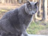 Mon chat est obèse : que faire ?