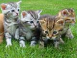 Le développement des chatons